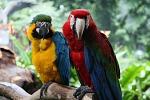 Ladri in una villa a Mondello, rubato pappagallo da 3 mila euro