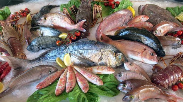 dieta, pesce, Sicilia, Vita