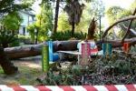 Paura in California, cade un pino secolare e ferisce 8 bambini: due sono in gravi condizioni