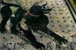 """""""Cave Canem"""", torna a splendere il mosaico di Pompei - Foto"""