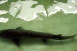 Gita in lago finisce in tragedia, bimba di 5 anni uccisa da uno storione