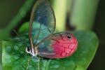 """Animali """"trasparenti"""", spettacolo della natura tutto da osservare - Foto"""