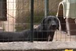 Carenze igieniche in un canile a Catania, tre denunciati