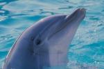 Si arena in spiaggia, delfino muore ad Augusta
