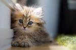 Australia, gatti in classe contro lo stress degli esami di maturità