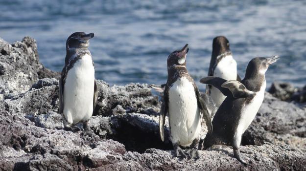 pinguini, popolazione, Sicilia, Società