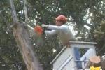 Trapani, via libera alla potatura degli alberi