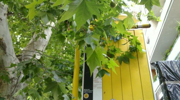 caldo, vegetazione urbana, Sicilia, Società
