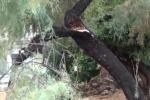 Palermo, potati i rami: ma i resti degli alberi vengono lasciati sul marciapiede
