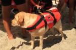 I cani-baywatch tornano sulla spiaggia di Mondello - Il video