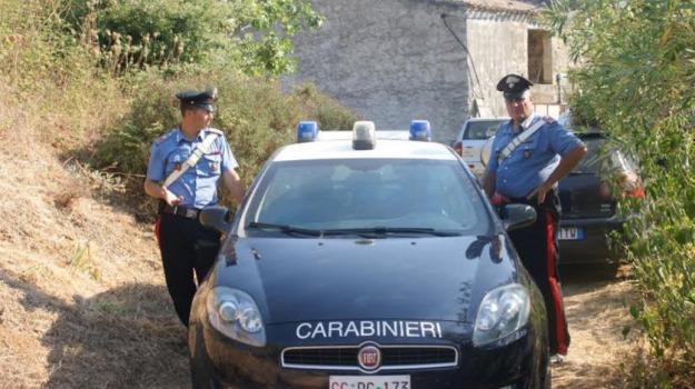 attacco cinghiali, Palermo, Cronaca, Società