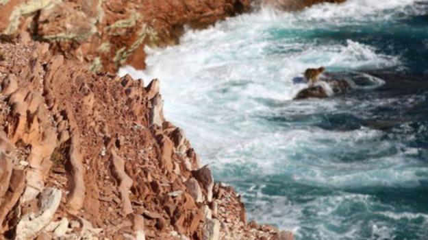 Capo Rama, fossili, molluschi, Palermo, rocce, terrasini, Sicilia, Società