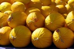 Gibellina, gli agricoltori puntano sul melone giallo
