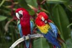 Blitz della finanza e forestale, sequestrati 250 pappagalli: una denuncia