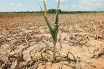 Caldo, Coldiretti: sos siccità per la pioggia dimezzata, danni per un miliardo nelle campagne