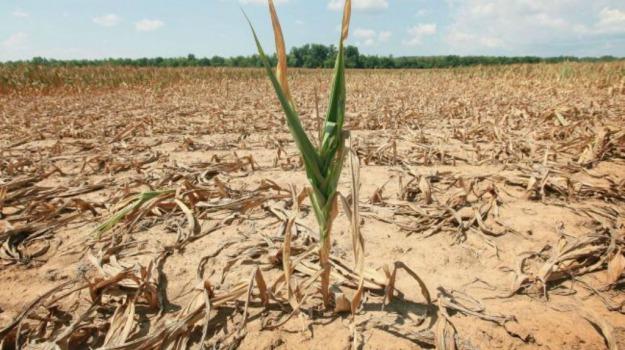 allarme siccità, Sicilia, Economia