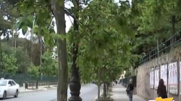 abbattimento ficus, Palermo, Cronaca