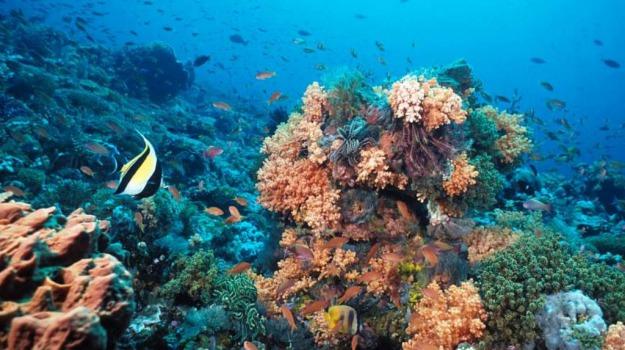 oceani, tracce di vita, Sicilia, Società