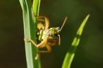 Allarme per grilli e cavallette: un quarto della specie risulta a rischio estinzione