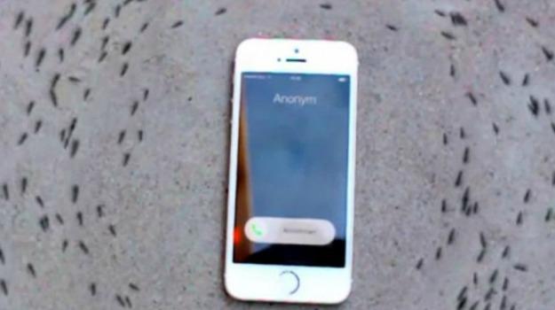 android, cellulare, iphone, smartphone, Sicilia, Società