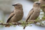 Agrigento, mostra ornitologica con volatili rari