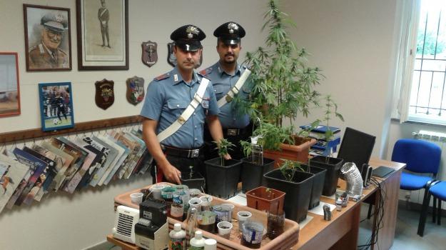 arresto, marijuana in casa, Palermo, Palermo, Cronaca