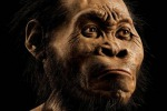 Un metro e 50 e il cervello quanto un'arancia: il nuovo antenato dell'uomo - Foto e Video