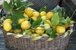 Sorpresi a rubare 200 chili di limoni, due arresti a Noto