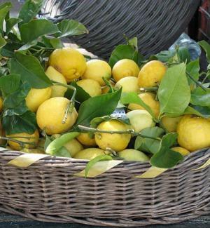 Il limone di Siracusa conquista mezza Europa