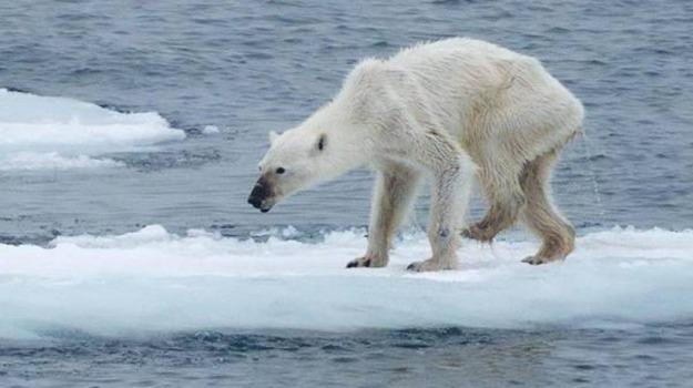 cambiamenti clima, orso magro, Sicilia, Società