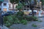 Forte maltempo a Palermo, alberi abbattuti e disagi: in un video i danni in città