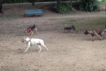 Agrigento, salvati sette cuccioli gettati in un cassonetto