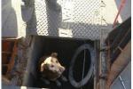 Cane in un pozzetto, salvato da operai a Palermo