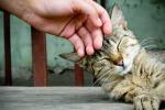 Coccolare i gatti li rende più sani e più felici: uno studio lo dimostra
