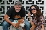George Clooney e la moglie Amal adottano una cagnolina: le foto