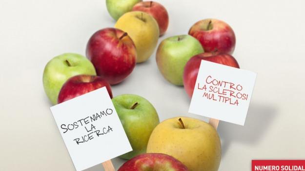 mele della ricerca, sclerosi multipla, Sicilia, Società