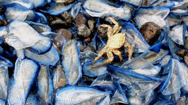 capo d'orlando, pesce, Messina, Economia
