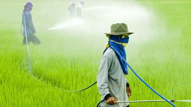 Greenpeace, pesticidi, Sicilia, Società
