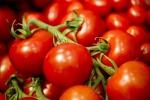 Pomodoro, Sicilia prima regione d'Italia per produzione
