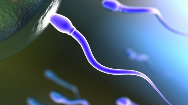 antiossidanti, spermatozoi, Sicilia, Società