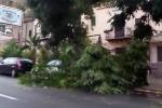Perturbazione nordafricana, forti piogge A Palermo allagamenti e alberi sradicati