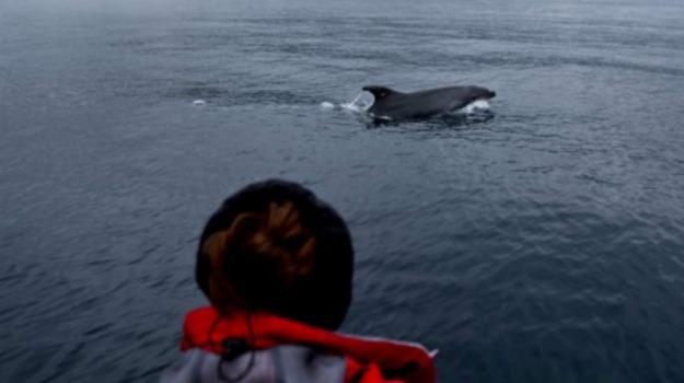 battello turistico, canda, dispersi, isola vancouver, morti, osservazione balene, Sicilia, Archivio