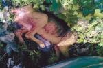 «Cane maltrattato e lasciato moribondo», la storia di violenza diventa virale