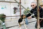 Un cane ogni giorno visita la tomba del padrone a Nicosia