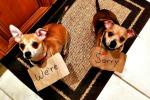 Animali combina guai, arriva l'hashtag dei padroni per raccontarli - Foto