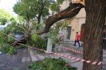 Bomba d'acqua investe Palermo Disagi, allagamenti e alberi divelti