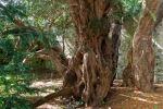Trapani, un albero per Villa Rosina