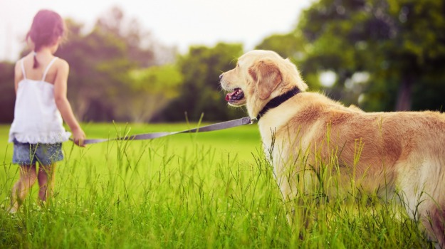 cani, elisir lunga vita, USA, Sicilia, Mondo