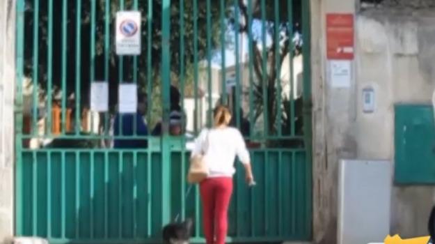 canile municipale, Palermo, protesta, Palermo, Cronaca