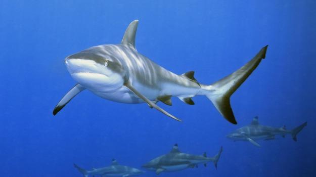cambiamento climatico, squali, Sicilia, Società